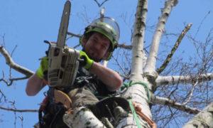 Prořezávání stromů