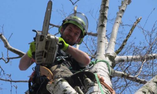 rez-stromu